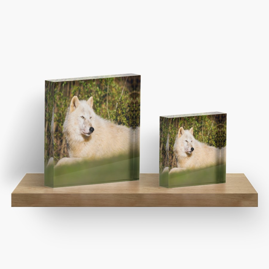 Relaxing Wolf Acrylic Blocks - Lone Wolf Outdoors
